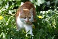 New Kitten in Town