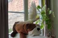 Jules, a strange Bird II