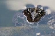 Frog or Crocodile (Frog Prince V)