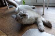 Foundling Cat Twix