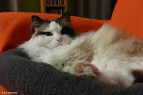 New Cat Pillow II
