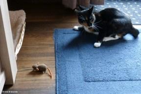 Oh Dear a Mouse