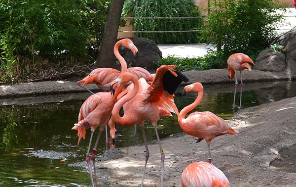 ABQ Zoo - 08-03 - 005