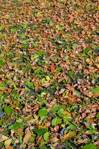 Fall Leaves 5b