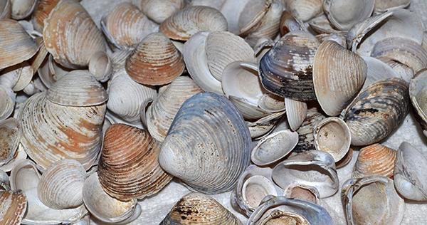 Shells b