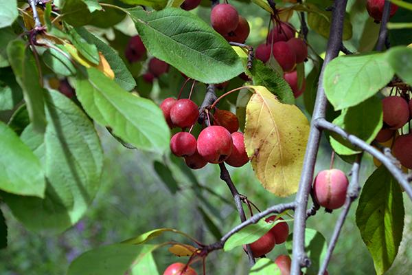 Berries 1B