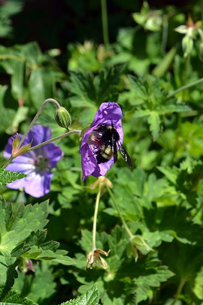 Bumblebee 4B