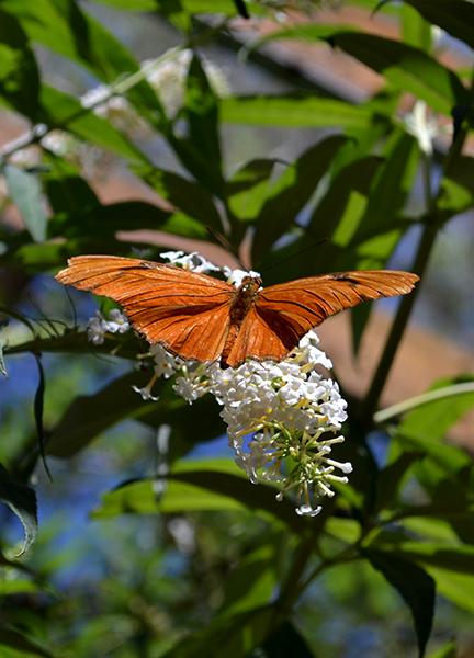 Butterfly 12B