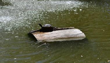 duck-pond-5