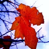 Weekly Photo Challenge: Changing seasons