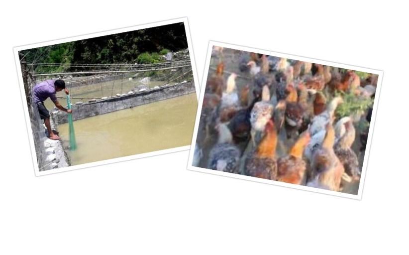 भण्डारी दम्पतीको कथा : जसले गाउँलाई नै माछामासुमा आत्मनिर्भर बनाए