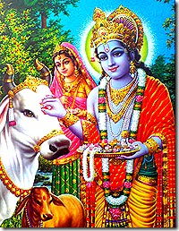 Krishna tending to the cows