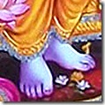 Shri Rama's lotus feet