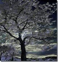 Moonlight through tree branches