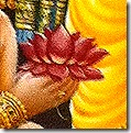 [Flower offered to Rama]