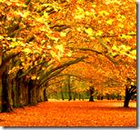 [fall leaves]