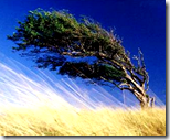 [windy day]