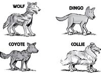 [different species]