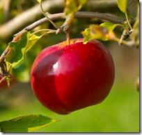[fruit on tree]