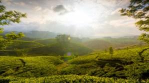 munnar_hills_kerala_india-1600x900
