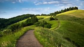path_green_fields-1600x900