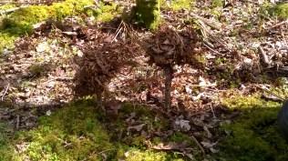 ... veidojam koku maketus no apkārtnē pieejamajiem materiāliem. Tai skaitā 3D formātā.