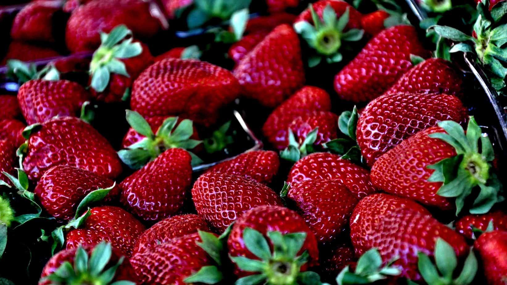 strawberryfestival