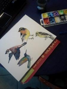 birds watercolor sketch