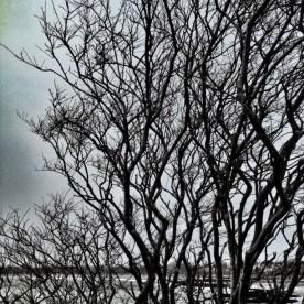 21. Tree