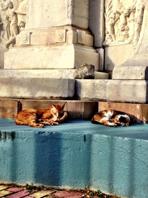Cats on the Streets of Old San Juan