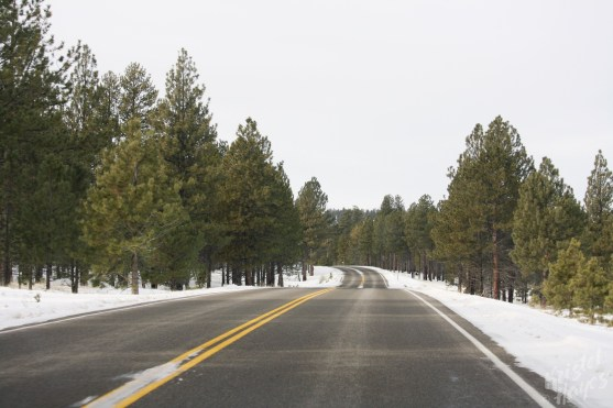 Bryce Canyon: View from the road