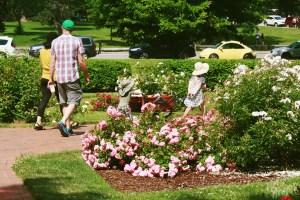 Deering Oaks Rose Circle: Family Strolling Through