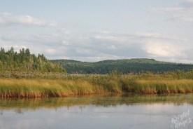 Marshes Near Sandy Point Allagash River