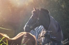 Horses Along River Barrow, Ireland