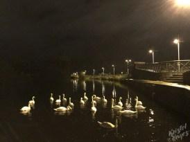 Swans at Night, Carlow-Barrow River, Ireland