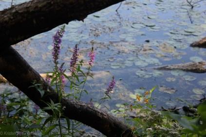 Lake Aeroflex at Kittatinny Valley State Park
