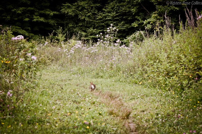 Peter Cottontail Hopping Down the Bunny Trail/Mr. Rabbit