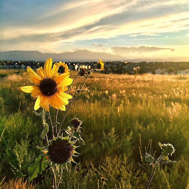 ColoradoSpringsSuburbia