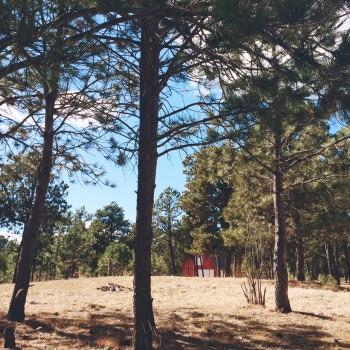 RedBarn_Woods
