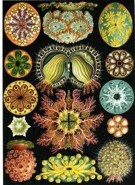 Ernst Haeckel Scientific Illustration