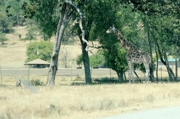 wildlife safari  7