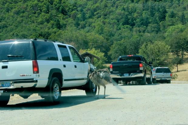 wildlife safari 4