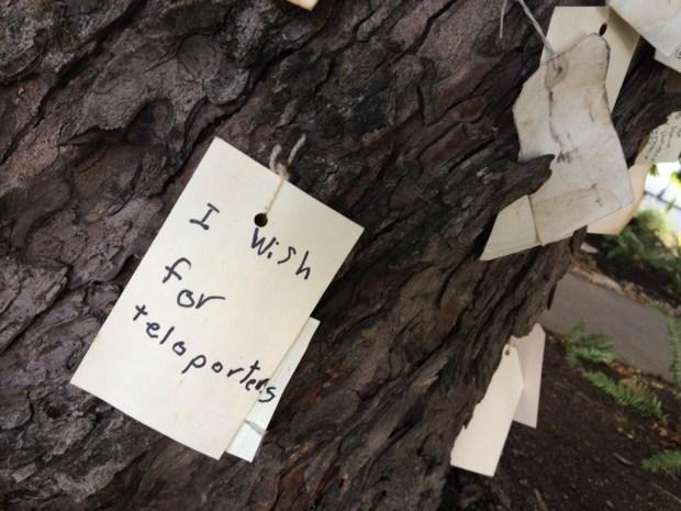 Wishing tree 5