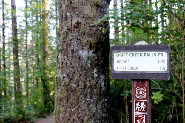 Drift Creek Falls 8