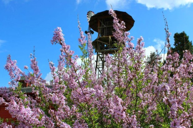 Lilac water tower