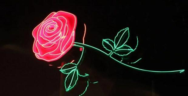 Best Neon Rose Festival