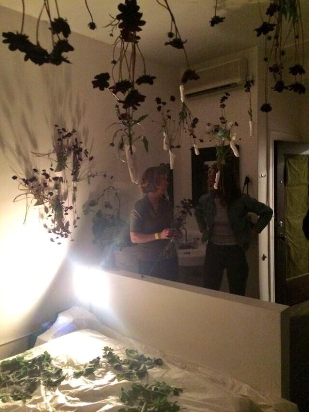 Content2015 flower room