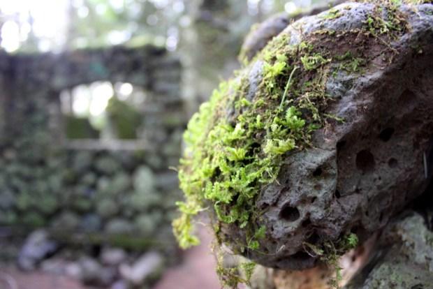 skamania stone house moss