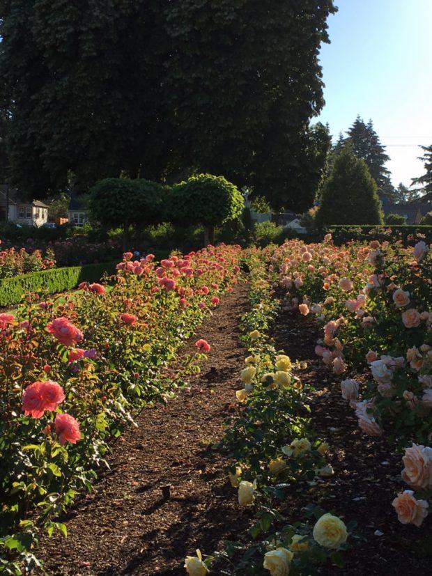 Peninsula Park Rose Garden row