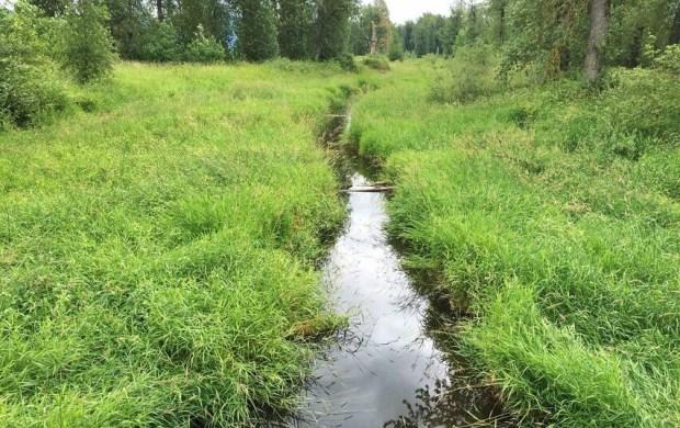 Steigerwald wetland